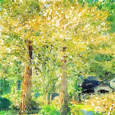 Sunny Photograph - Spring Maples by Anna Porter