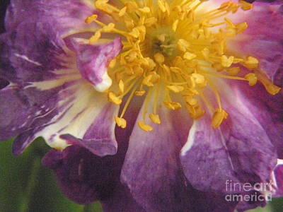 Photograph - Spring by Marijo Fasano