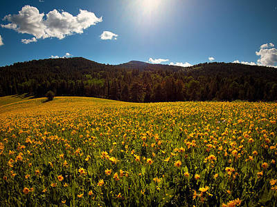 Photograph - Spring Meadow by Leland D Howard