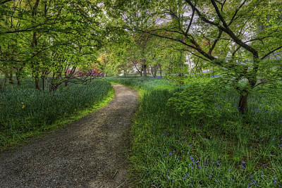 Olympic Sports - Spring Meadow Path by Ian Mitchell