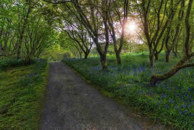 Photograph - Spring Meadow Path V2 by Ian Mitchell
