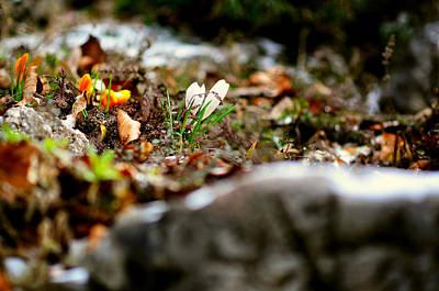 Photograph - Spring Mood by Oleksandr Maistrenko