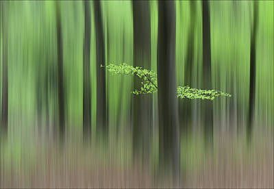 Blur Photograph - Spring Morning by Huib Limberg