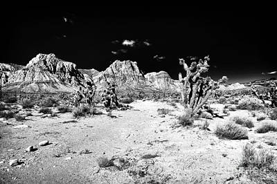Photograph - Spring Mountain by John Rizzuto