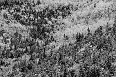 Maine Landscapes Digital Art - Spring On Cadillac Mountain Acadia National Park Black And White by Keith Webber Jr