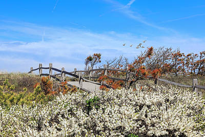 Wellfleet Photograph - Spring On Cape Cod by Bill Wakeley