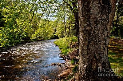 Kinzua Photograph - Spring On Kinzua Creek by Allison Senchur