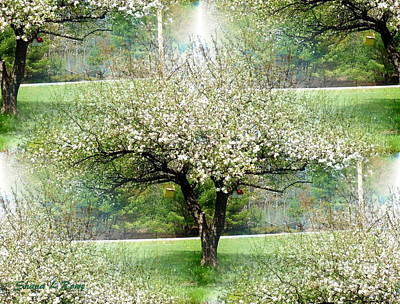 Photograph - Spring Orchard by Shana Rowe Jackson