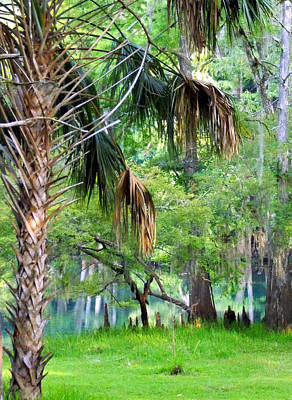 Photograph - Spring Palms An Cypress by Sheri McLeroy