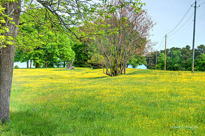 Photograph - Spring Pasture - Nc State Dairy Farm by Paulette B Wright
