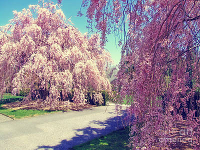 Cherry Blossoms Road Photograph - Spring Path by Nishanth Gopinathan