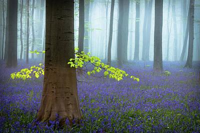 Bluebells Wall Art - Photograph - Spring........... by Piet Haaksma