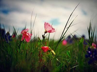 Medium Format Film Digital Art - Spring Pink by Linda Unger