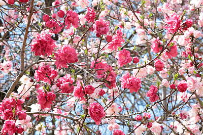 Fruits Photograph - Spring Pink by Carol Groenen