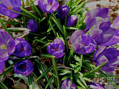 Photograph - Spring Poking Through 3 by Mark Dodd