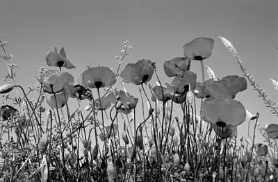 Poppy Photograph - Spring Poppies by George Atsametakis