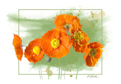 Photograph - Spring Poppy by Al  Mueller