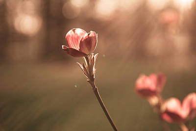 Photograph - Spring Prodigy by Scott Rackers