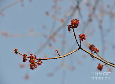 Photograph - Spring Promise by Jola Martysz