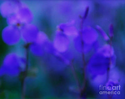 Photograph - Spring Purfume by Julian Cook