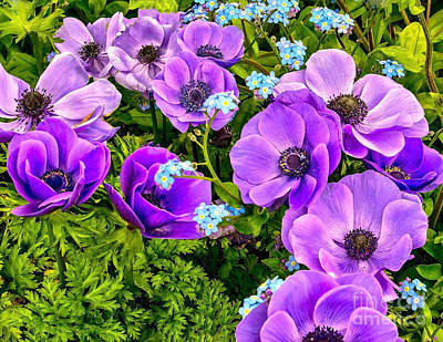 Photograph - Spring Purple by Nick Zelinsky