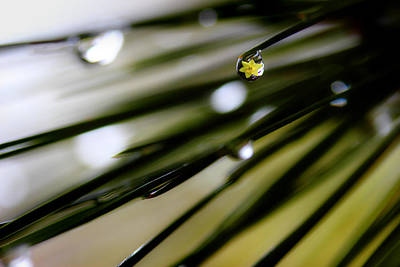 Pine Needles Photograph - Spring Rain On The Pines by Michael Eingle