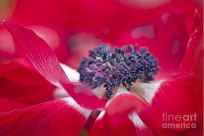 Caen Photograph - Spring Red by Jacky Parker