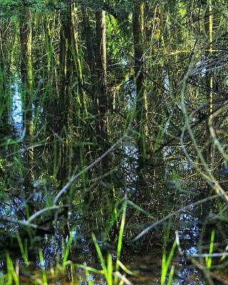 Photograph - Spring Reflections 158 by Jerry Sodorff