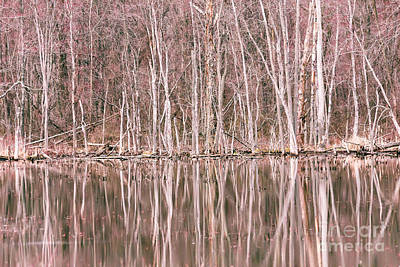 Photograph - Spring Reflections by Mary Lou Chmura