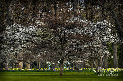 Photograph - Spring by Ronald Grogan