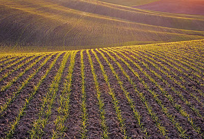 Photograph - Spring Rows by Doug Davidson
