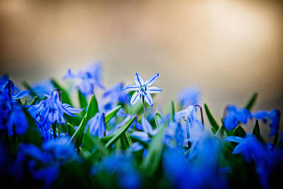 Photograph - Spring Shines by Robert Clifford