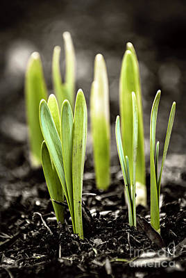 Sprout Photograph - Spring Shoots by Elena Elisseeva