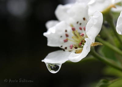 Photograph - Spring Shower by Annie Babineau