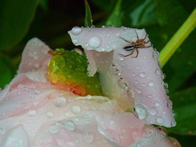 Gallery Website Photograph - Spring Showers  by Dianne Cowen