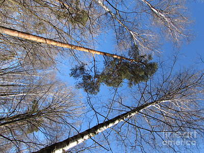 Photograph - Spring Sky by Anna Yurasovsky