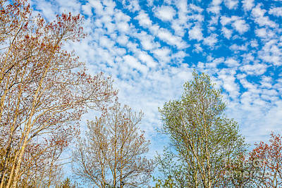 Photograph - Spring Sky by Susan Cole Kelly