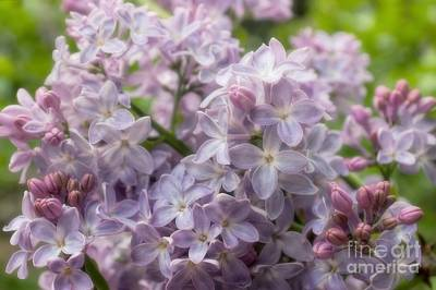 Photograph - Spring Soft by Peggy Hughes