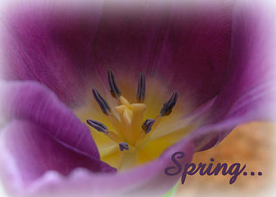 Photograph - Spring Stamens by Heidi Manly