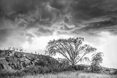 Photograph - Spring Storm On The Serengeti Plain by Sandra Bronstein