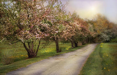 Cherry Blossoms Road Photograph - Spring Street by Robin-Lee Vieira