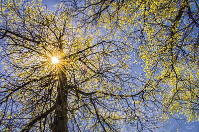 Photograph - Spring Sunburst by Peg Runyan