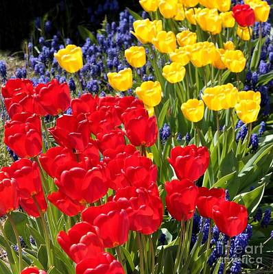 Hyacinths Wall Art - Photograph - Spring Sunshine by Carol Groenen