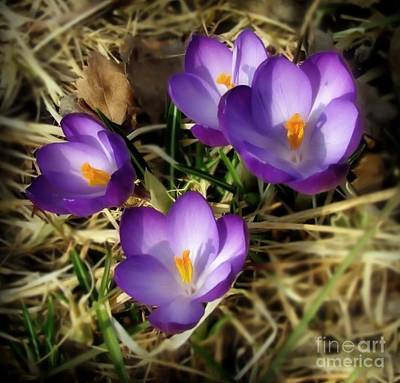 Photograph - Spring by Sylvia  Niklasson