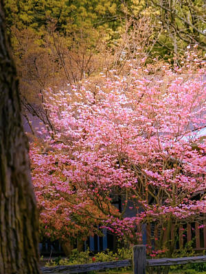 Photograph - Spring Think Pink by Connie Dye