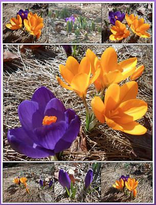 Spring Time Crocuses Art Print by Patricia Keller