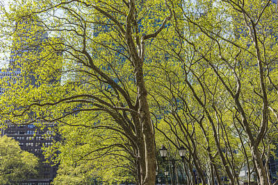 Spring Time In Bryant Park New York Art Print by Angela A Stanton