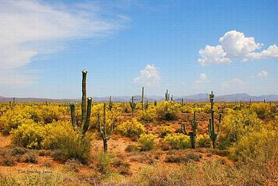 Spring Time On The Rolls - Arizona. Art Print
