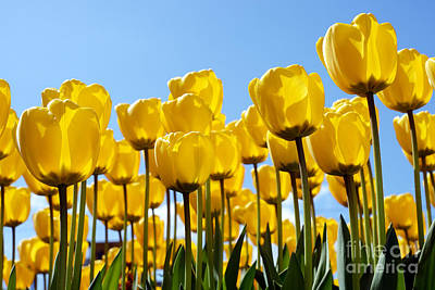 Flowers Photograph - Spring Time Tulips 4 by Terry Elniski