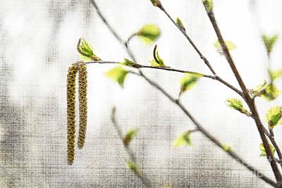Spring Tree Branch Print by Elena Elisseeva